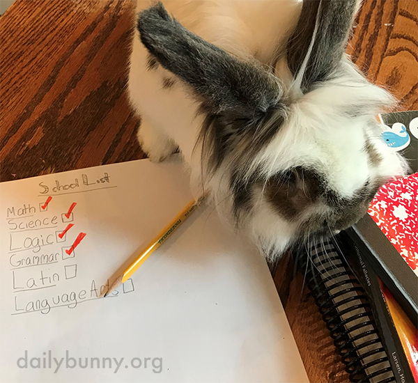 Bunny's Favorite Part of Human's Homework Is the All the Tasty Paper