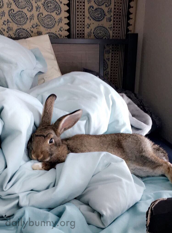 It's Hard Getting Out of Bed on Monday Morning, Isn't It, Bunny?