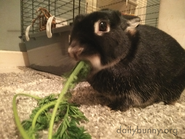 Bunny Will Make Quick Work of Those Greens