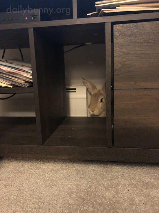 Bunny's Just Making Sure Human Assembled This Furniture Correctly