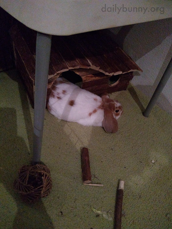 If Bunny Stays All the Way Inside Her House She Can't See Everything Going on Outside of It