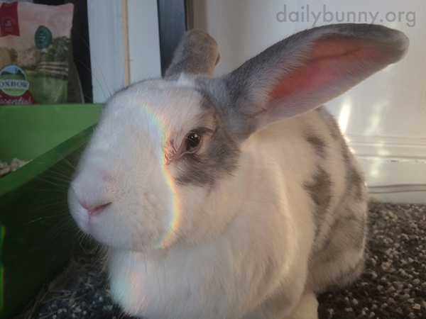 The Light Loves Bunny So Much It Gives Him a Rainbow