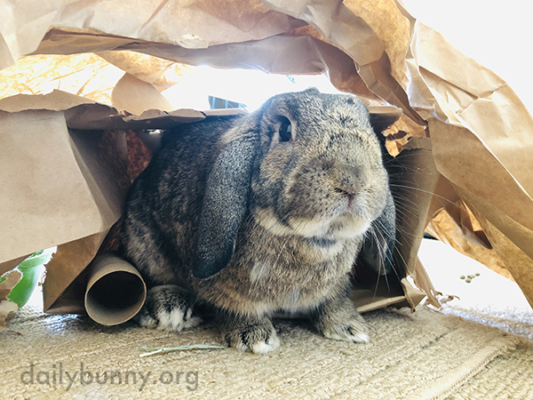 Bunny Has Made Himself a Little Cardboard Cave