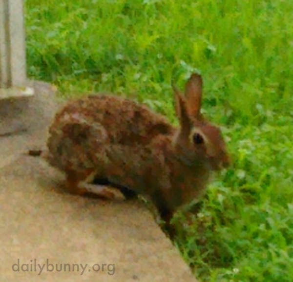 Wild Bunny Visits Her Human Friend