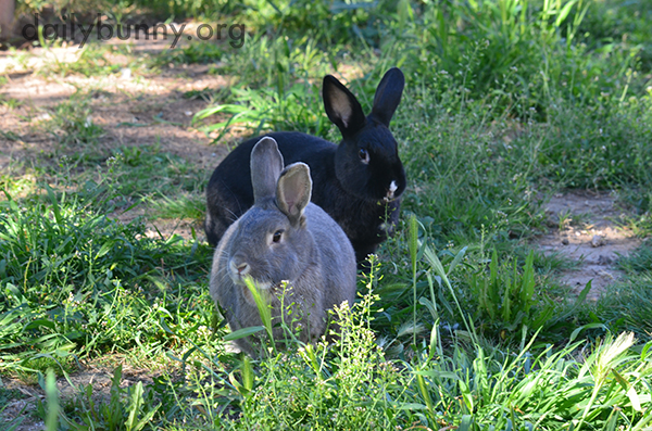 Bunnies Get Out Among the New Greenery