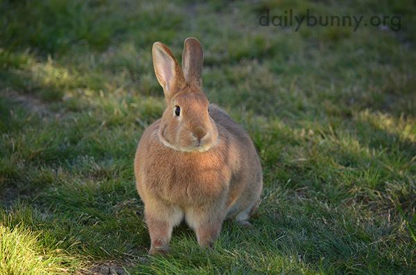 I Bet When Bunny Loafs She Looks Like a Proper Loaf of Bread