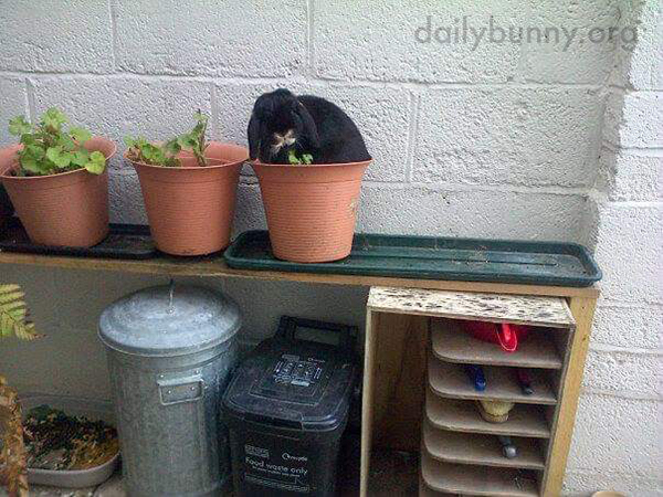 To Think All This Time Bunny Had the Humans Convinced It Was Slugs Eating Up the Plants