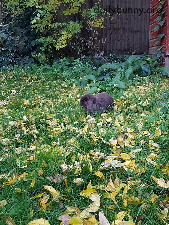 Bunny Samples a Little Leaf