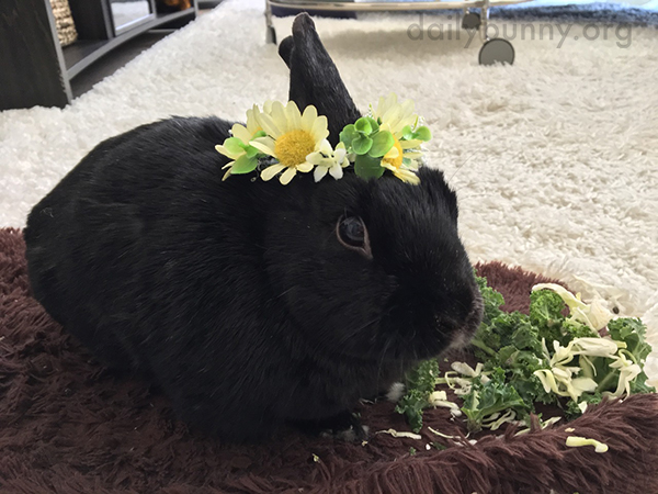 Bunny Celebrates the Arrival of Spring with a Flower Crown - and a Snack 1