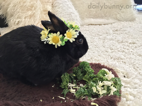 Bunny Celebrates the Arrival of Spring with a Flower Crown - and a Snack 3