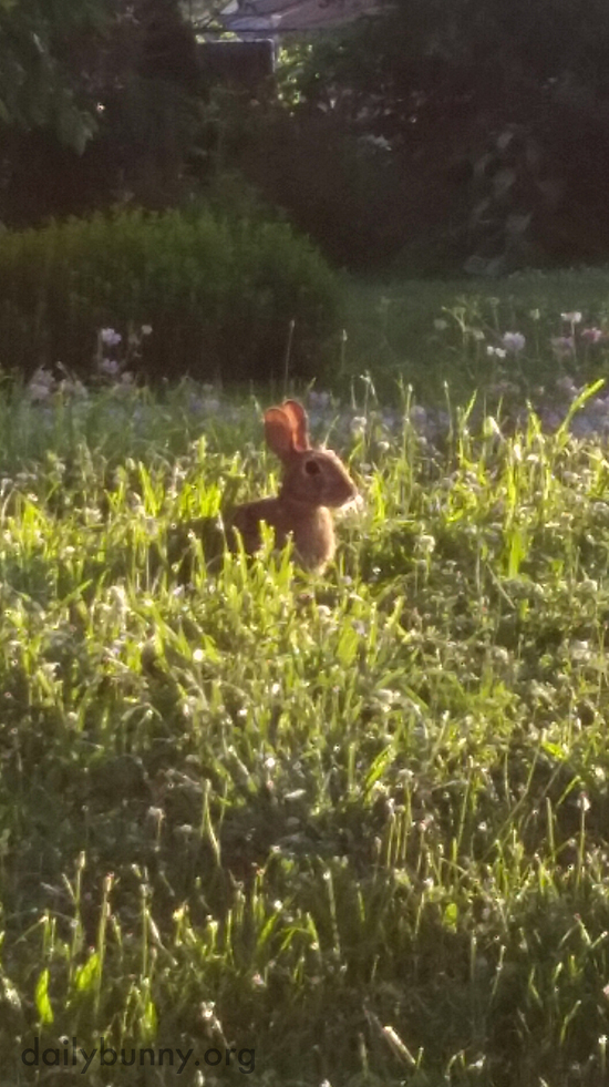 This Wild Bunny Knows Just Where to Go for a Proper Buffet