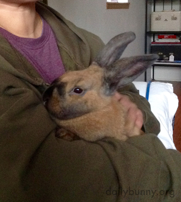 Bunny Enjoys Some One-on-One Time with Her Human