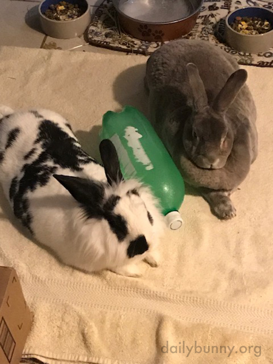 Bunnies Chill Out with a Frozen Bottle