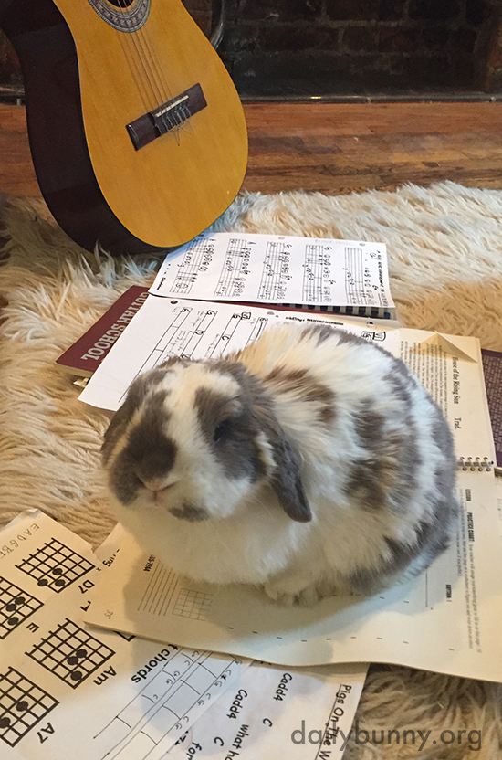 Forget Printed Music, Forget Rules, Forget Theory - Let Bunny's Cuteness Inspire You!