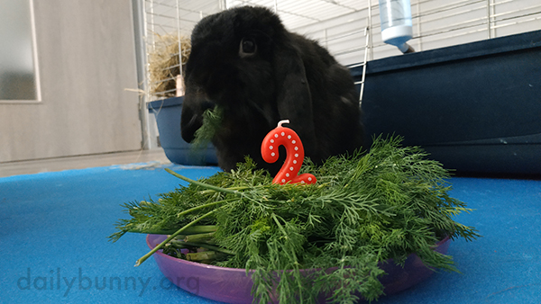 Instead of a Birthday Cake Bunny Gets a Birthday Dill Plate!
