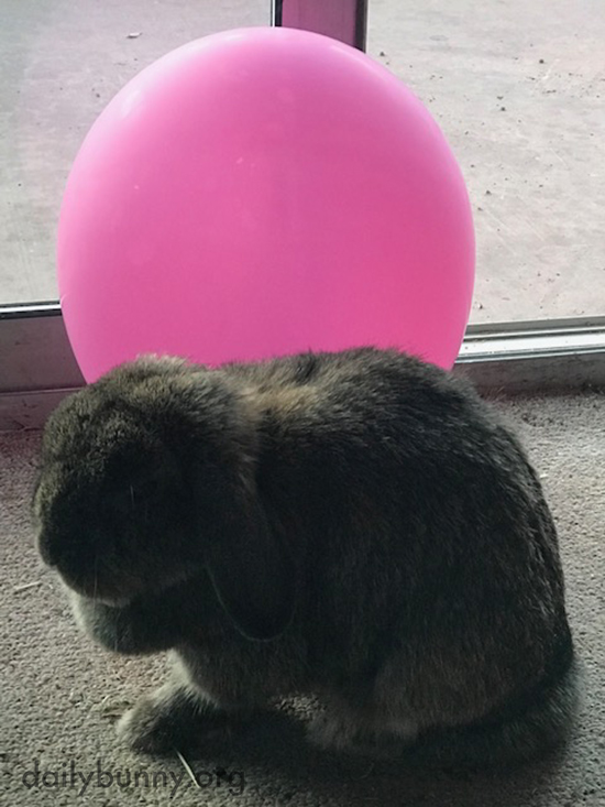 Which Is Rounder, the Bunny or the Balloon?