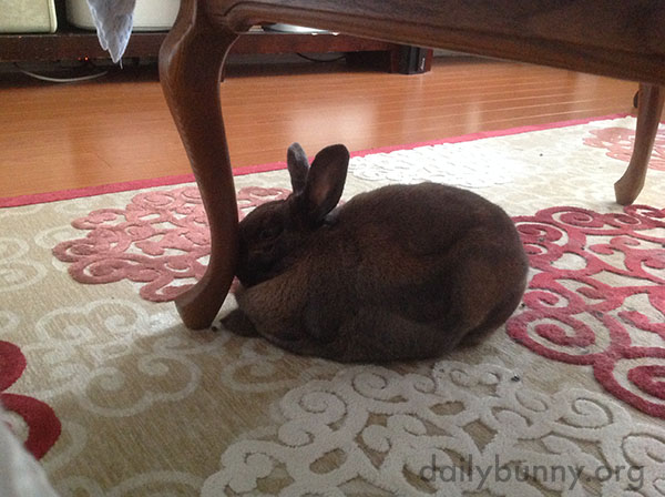 A Table Leg Gives Bunny Just a Little More Head Support During a Nap
