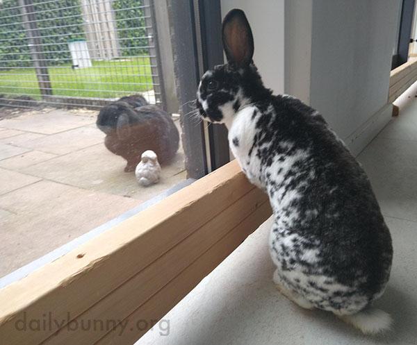 Bunny Has a Case of FOMO 1