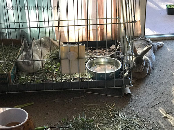 Bunny Quietly Keeps His New Friend Company