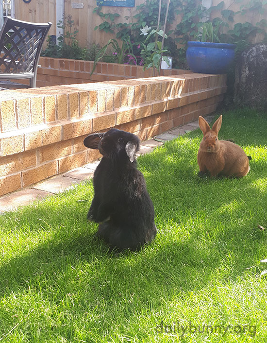 Bunnies Take Advantage of a Beautiful Spring Day in the Backyard