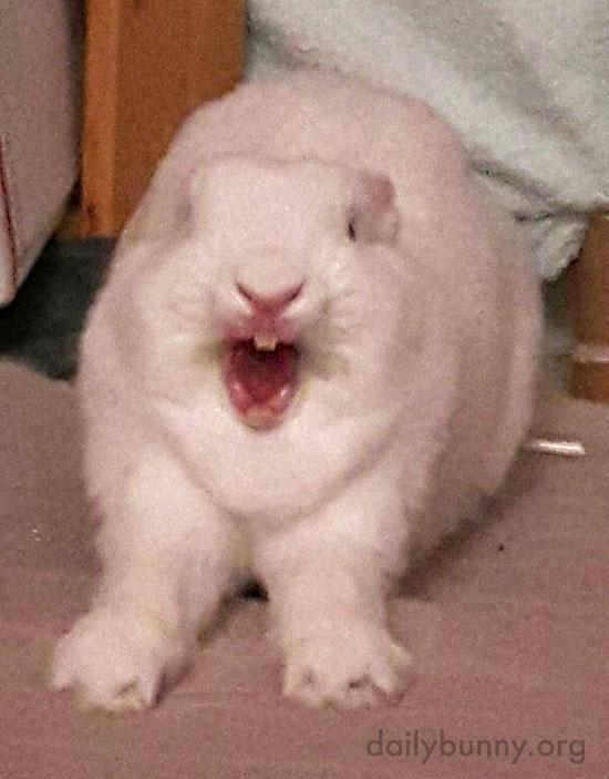 Bunny Has a Biiig Yawn and Stretch