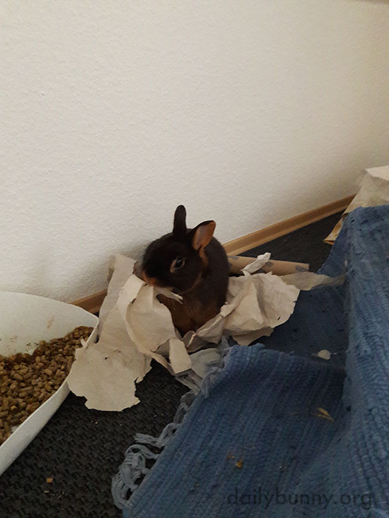 For a Bunny There's Nothing Like Ripping Up a Bunch of Paper