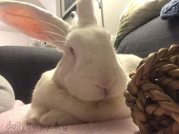 Bunny Sits for a Very Dignified Portrait