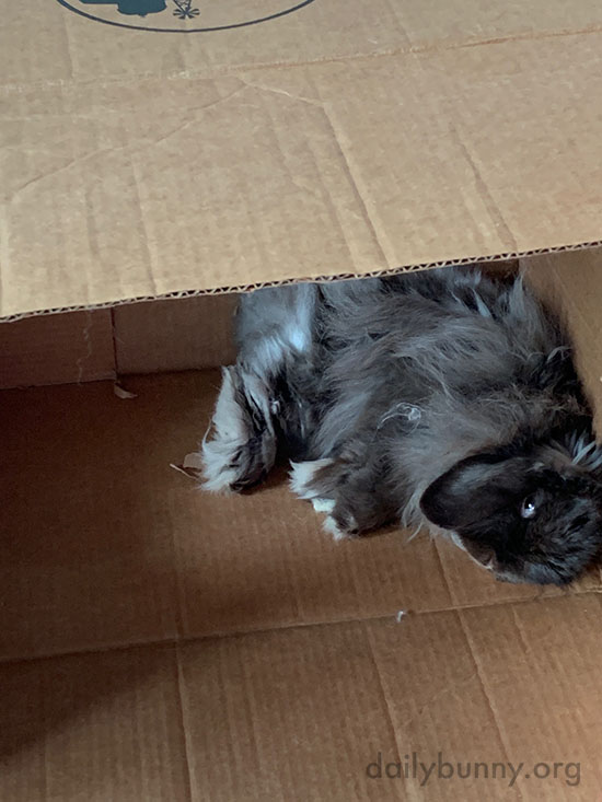 A Box Provides Endless Lounging Options for a Bunny 1