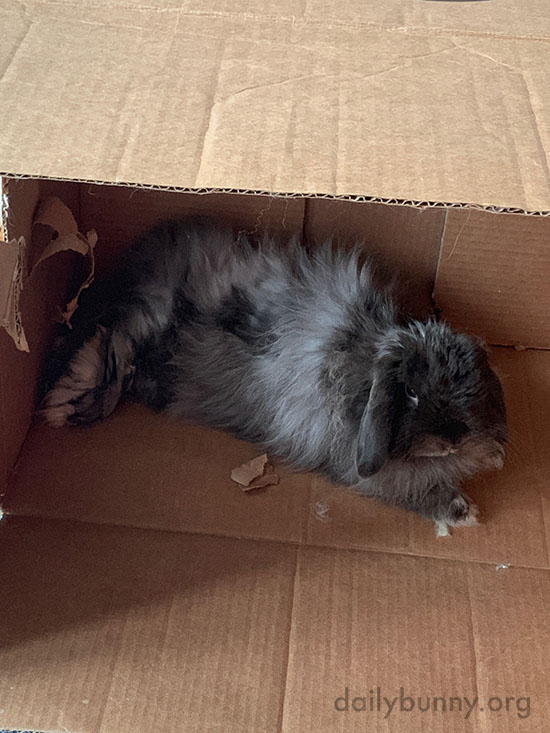 A Box Provides Endless Lounging Options for a Bunny 2