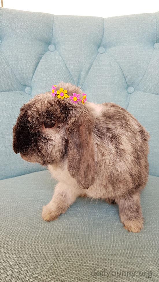 Bunny Is Queen of Spring