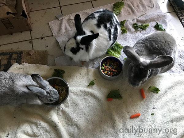 Bunnies That Nom Together Stay Together