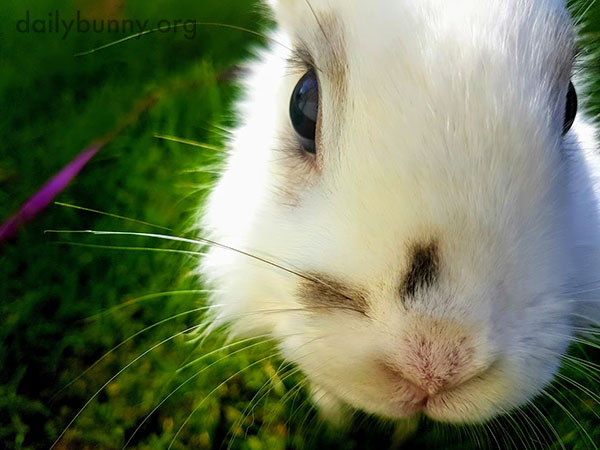 Closeup of Curious Bunny's Sweet Little Face