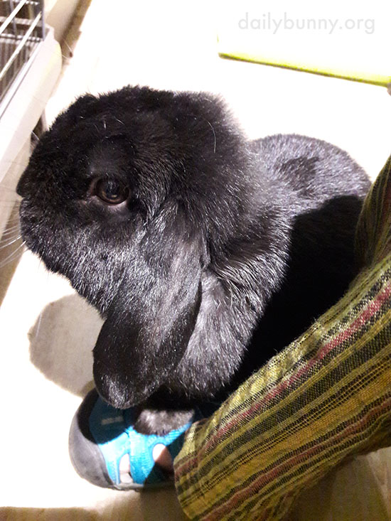 If Bunny Holds Human's Foot, Human Can't Go Anywhere Again