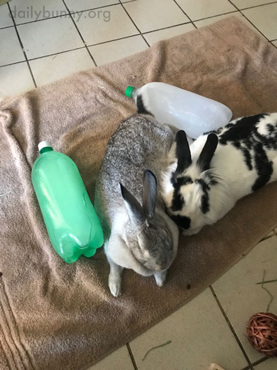 Bunnies Team Up to Cool Down 2