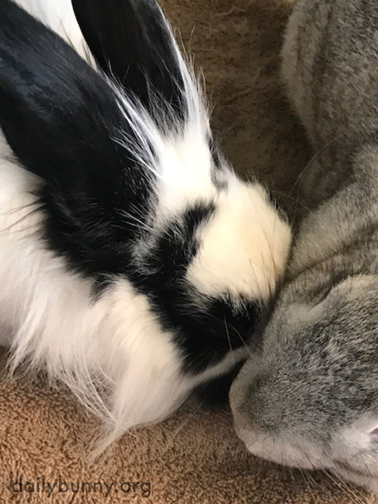 Bunny Shows His Friend Some Affection