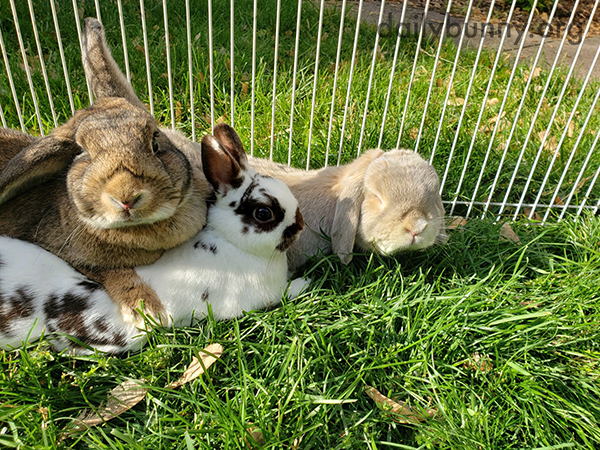 Bunnies Pile Up in an Outdoor Cuddle Puddle