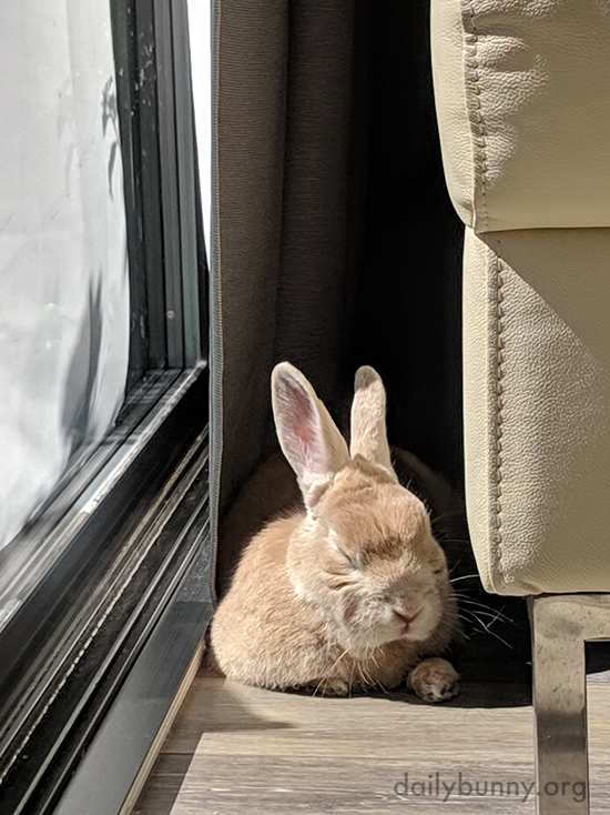 Can You Really Nap with the Sun in Your Eye Like That, Bunny?