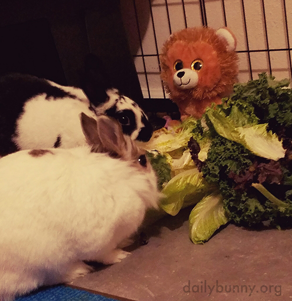 Bunnies Share a Pile of Greens... With Weirdly Enthusiastic Onlooker