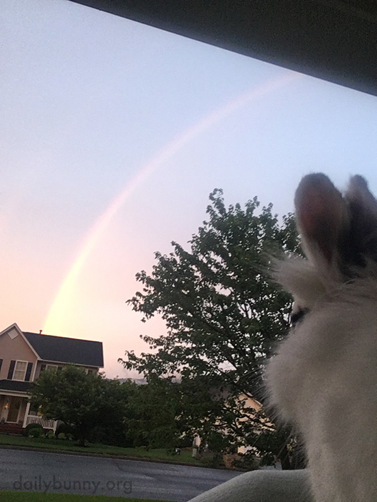 What's at the End of the Rainbow, Bunny? A Pot of Treats, Maybe?