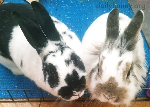 No, Bunnies, Human's Just Snapping a Photo, Not Distributing Treats