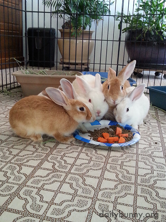 Rescued Bunny Family Sits Down for Dinner Together