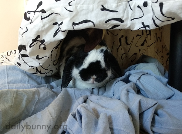 Bunny Hides Away in Her Cozy Fort