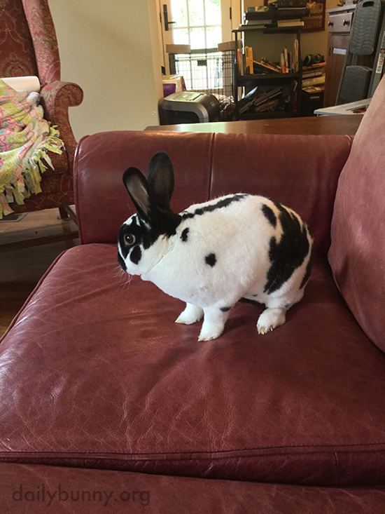 Bunny Plans His Next Move