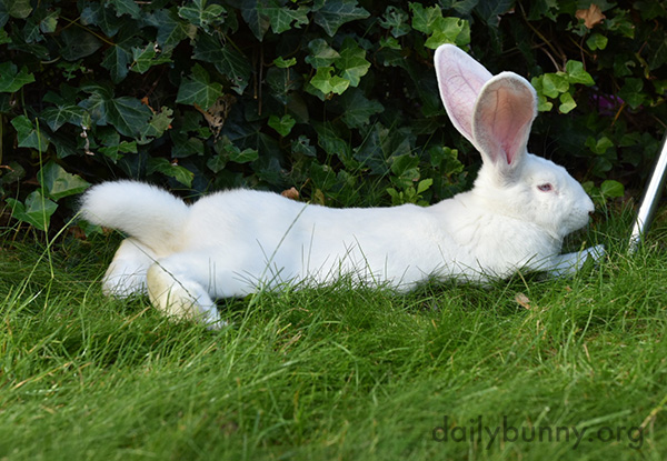 In This Pose Even Bunny's Tail Is Long