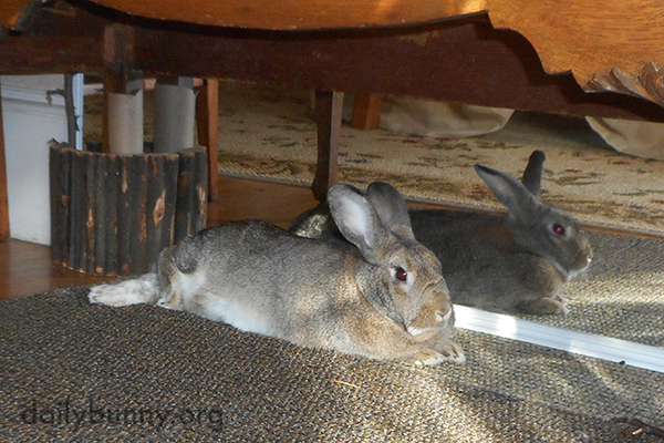 In This Spot Bunny Can Enjoy the Sunbeam AND Admire Himself in the Mirror