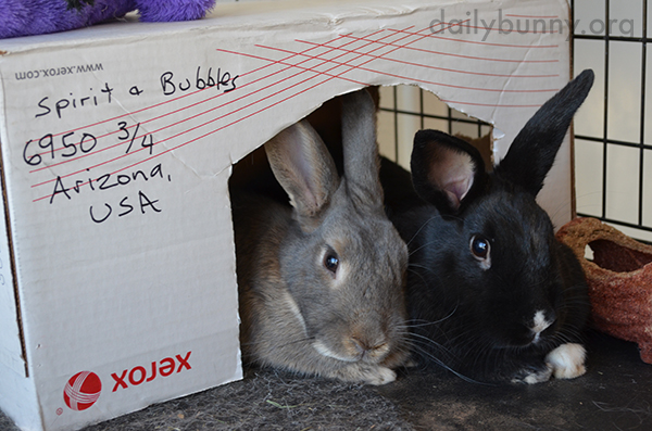 Bunnies Cozy Up at Home