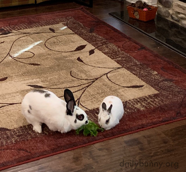 Understanding the Importance of Sharing, Bunnies Split a Lettuce Leaf