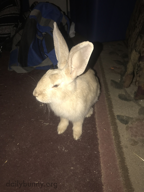 Welcome to Your New Home, Bunny