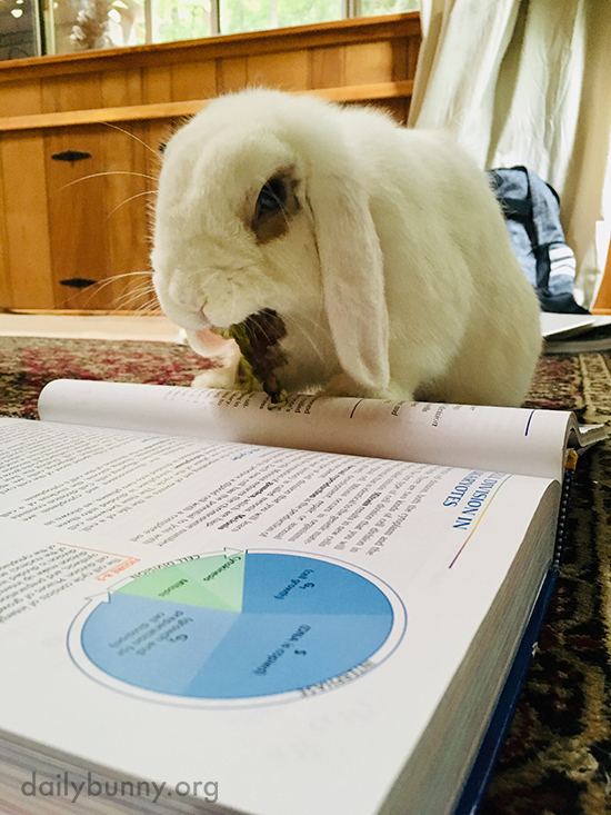 So Whatcha Studying This Semester, Human? 2