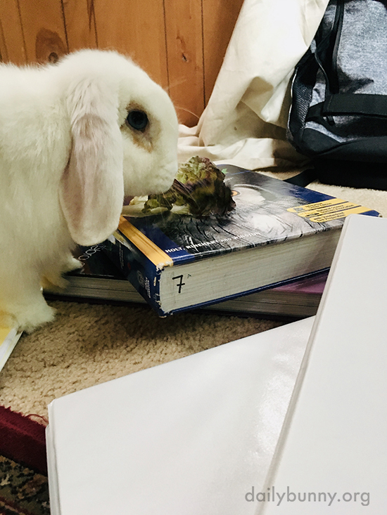 So Whatcha Studying This Semester, Human? 3